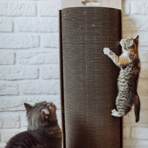 Cat scratcher Bellycat
