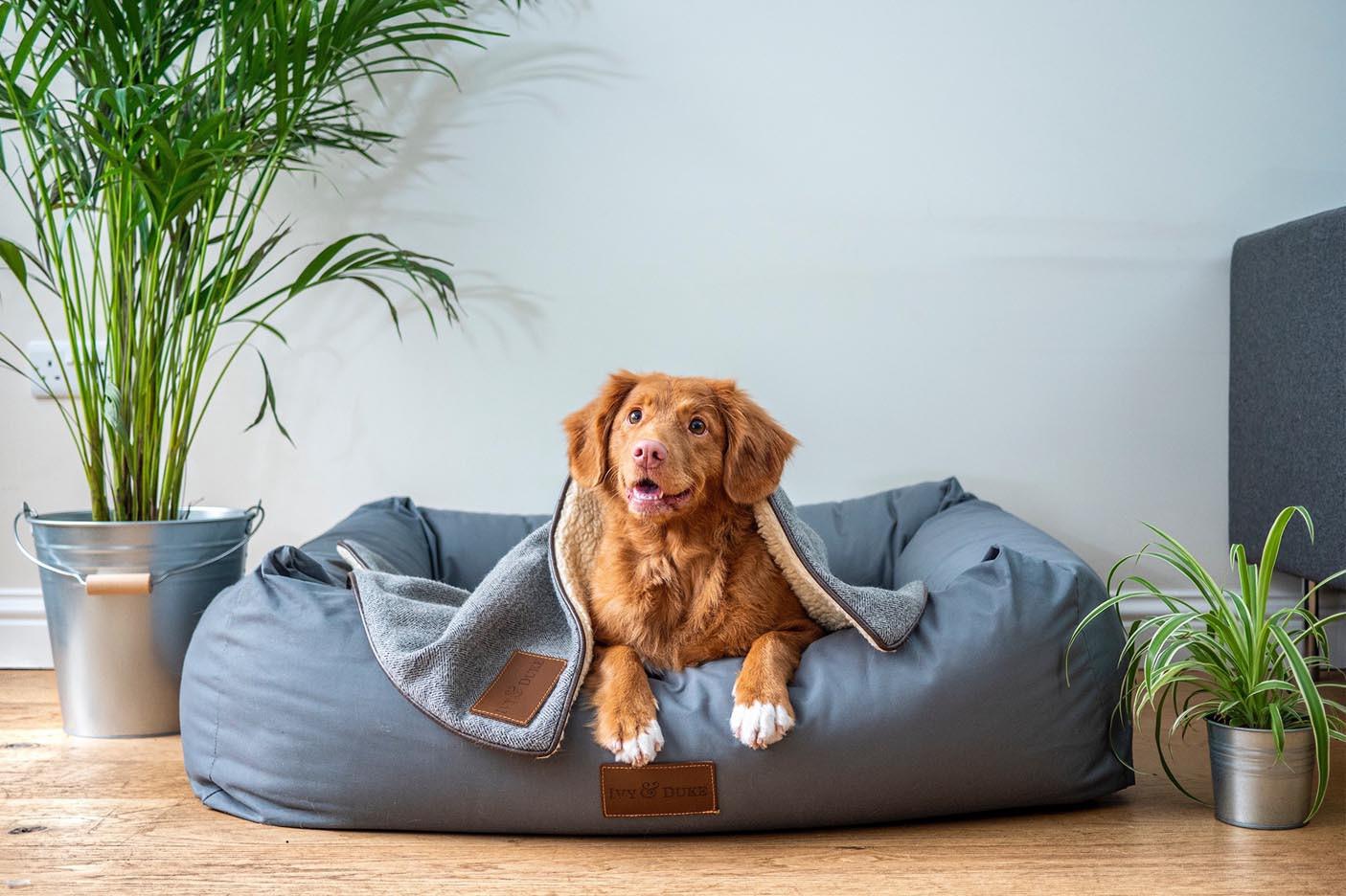 Legowisko dla psa – jak wybrać?