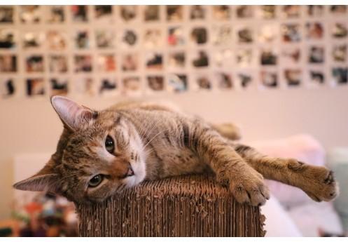 Jak stymulować koty