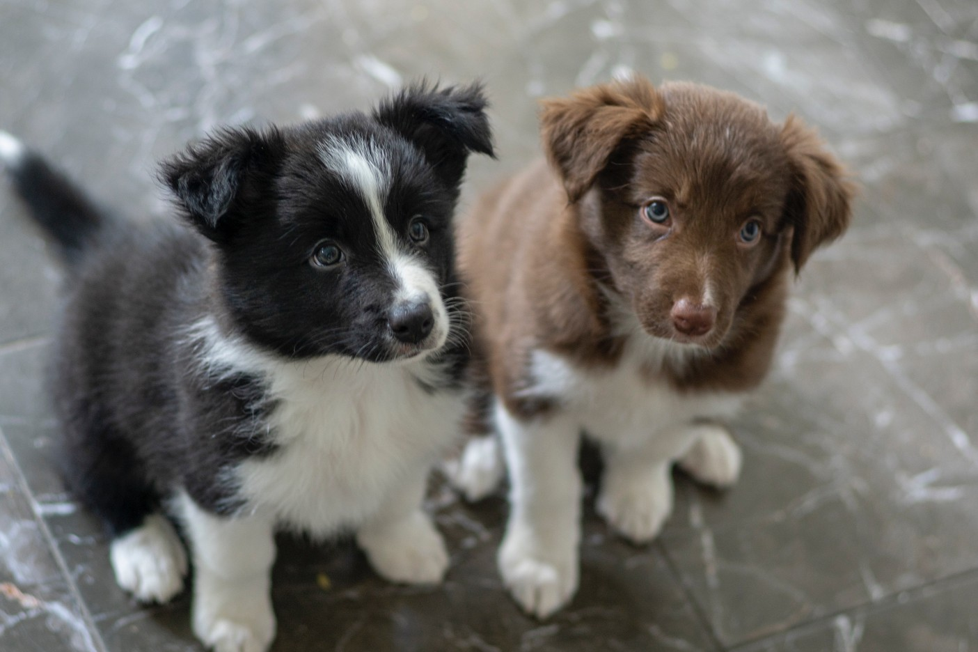 Dog training - why it's worth to train your dog
