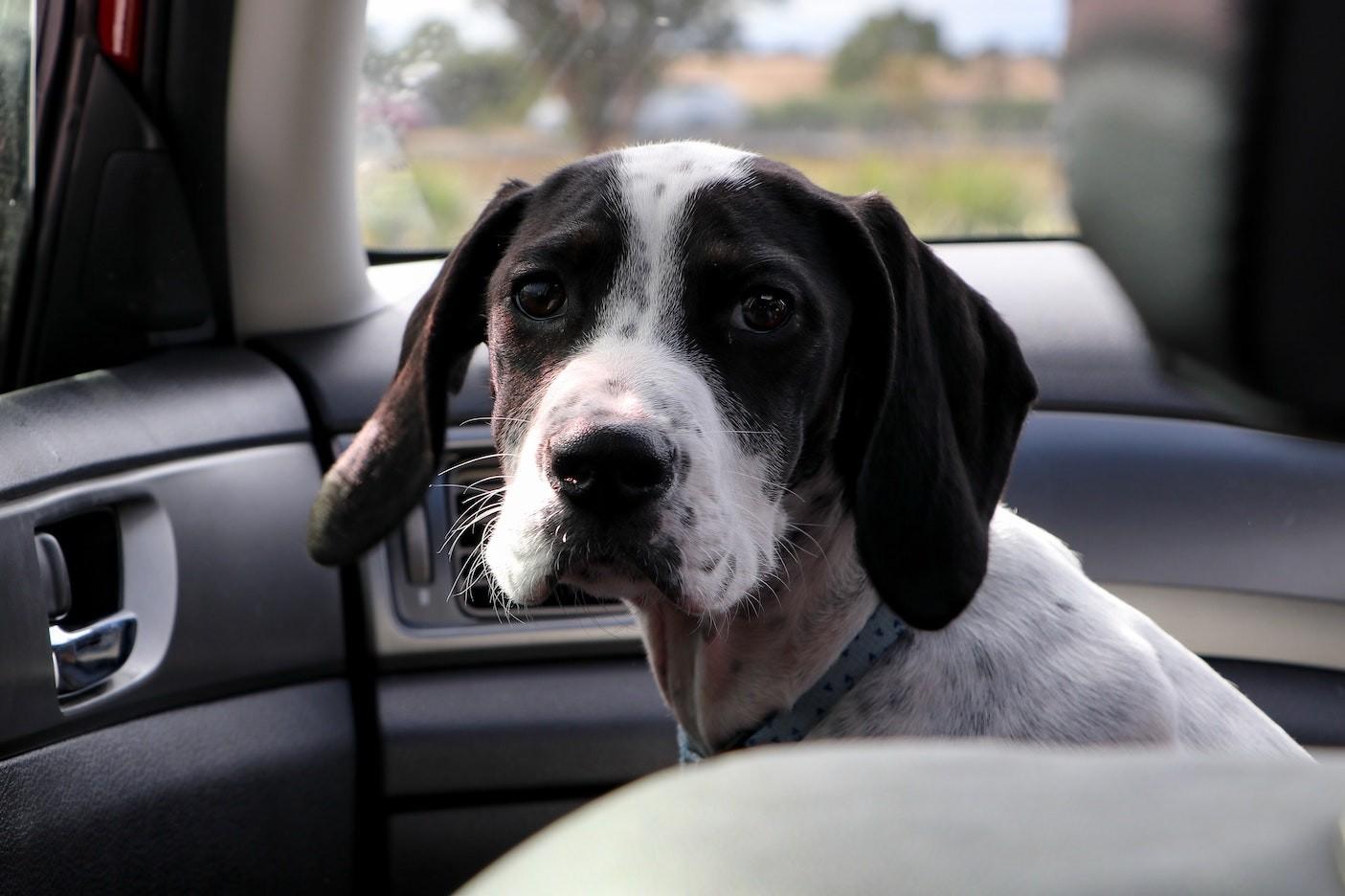 Jak bezpiecznie i wygodnie podróżować z psem